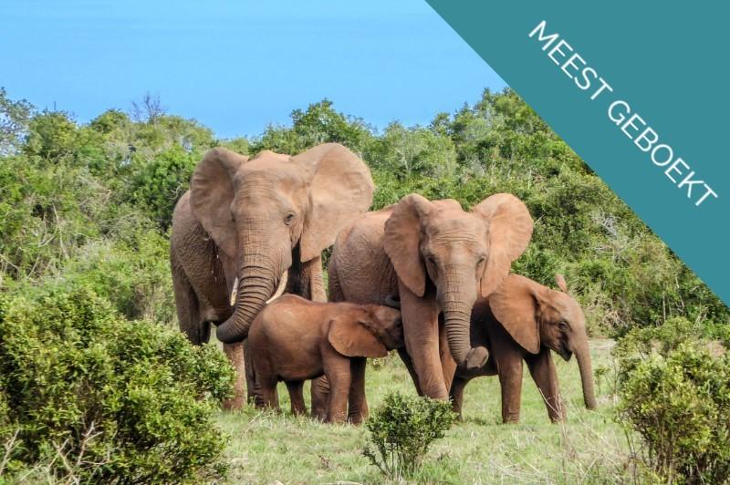 Olifanten-in-Krugerpark-Zuid-Afrika BANNER